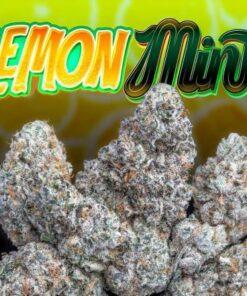 lemon mints strain