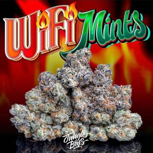 Jungle boys wifi mints